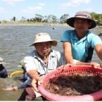 Dịch bệnh thủy sản: vì sao bùng phát mạnh?