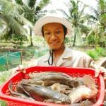 Kỹ thuật nuôi cá Bống tượng, cá Chình