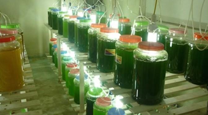 Nhà máy thí điểm biến CO2 thành tảo cho ngành công nghiệp nuôi trồng thủy sản