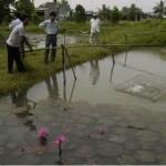 Kinh nghiệm nuôi cá bống tượng