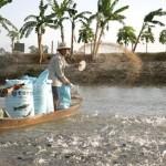 Phòng chống dịch bệnh thủy sản