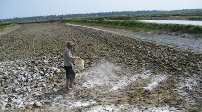 Vôi và kỹ thuật bón vôi trong nuôi trồng thủy sản