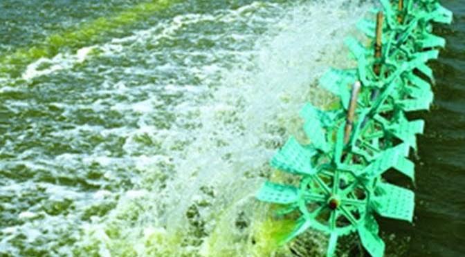 Một số loài tảo phổ biến và biện pháp khắc phục tảo độc trong các ao nuôi tôm thâm canh