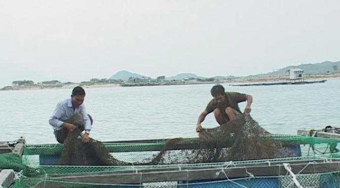 Hạn chế rủi ro nhờ nuôi tôm theo hướng bảo vệ môi trường