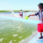 Các phương pháp trị bệnh cho thủy sản nuôi