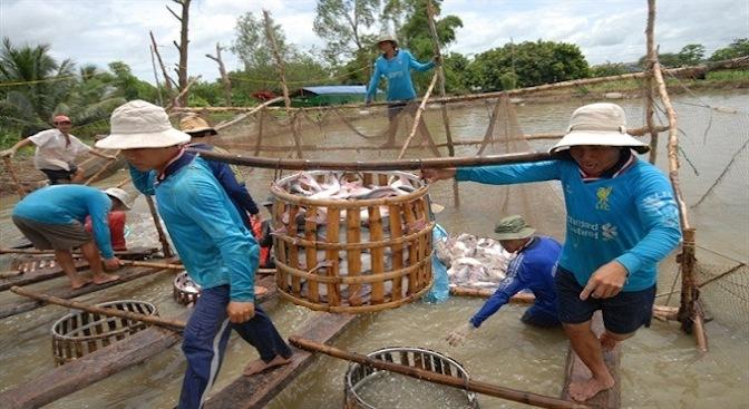 Công khai cơ sở nuôi, chế biến cá tra làm sai