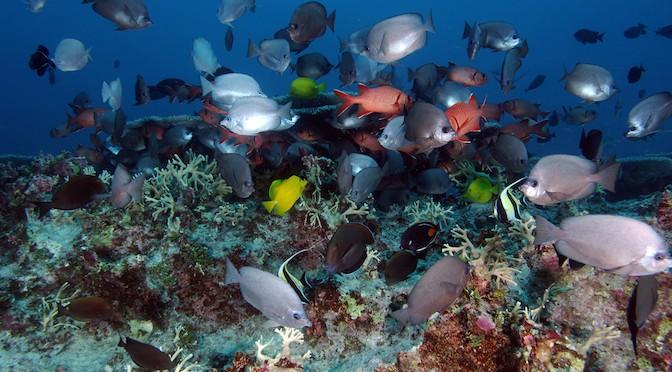 Một số lưu ý khi thiết lập và chăm sóc bể cá cảnh