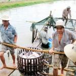 Kinh nghiệm nuôi cá tra sạch, giảm giá thành
