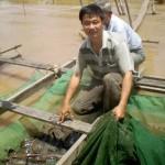 Làm giàu từ nuôi cá chạch lấu sát biên giới Campuchia