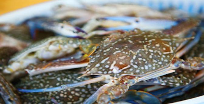 Ngân hàng Ghẹ xanh: Mô hình cộng đồng bảo vệ nguồn lợi thủy sản