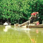 Bảo vệ môi trường trong cải tạo đầm nuôi tôm