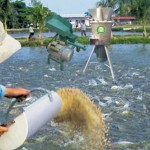 Chế biến sử dụng thức ăn cho cá