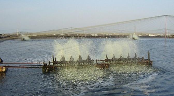 Công nghệ Biofloc trong nuôi trồng thủy sản