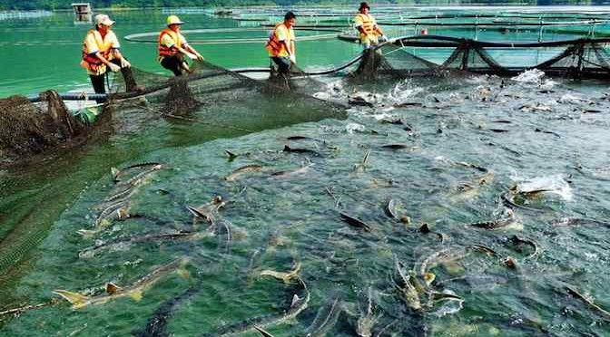 Định hướng phát triển cá nước lạnh Việt Nam đến năm 2020