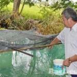Đồng Tháp: Nuôi ếch kết hợp nuôi cá cho lợi nhuận cao