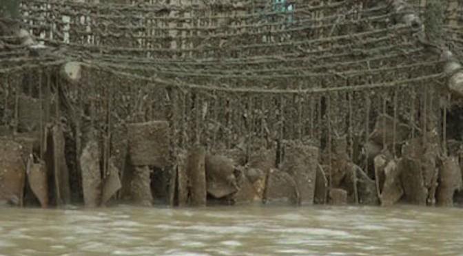 Bến Tre: Ông Nguyễn Văn Rừng thành công với mô hình nuôi hàu