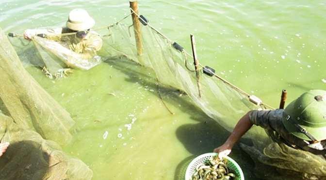 Nghệ An: Hội thảo nhân rộng mô hình nuôi thương phẩm cá chạch quế