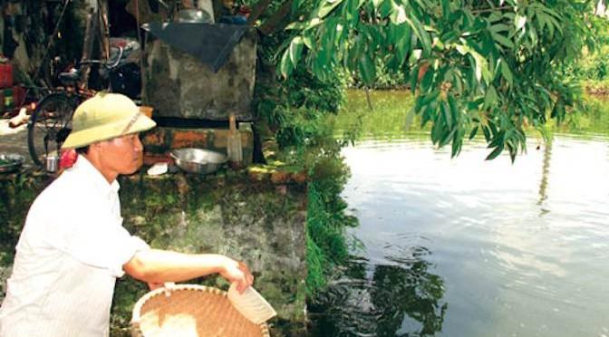 Khai thác hiệu quả tiềm năng ruộng trũng nuôi trồng thủy sản