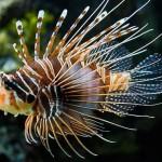 Mười loài cá đẹp rực rỡ nhất