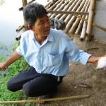 Khánh Hòa: Nuôi cá chim hồng nước ngọt lợi nhuận cao