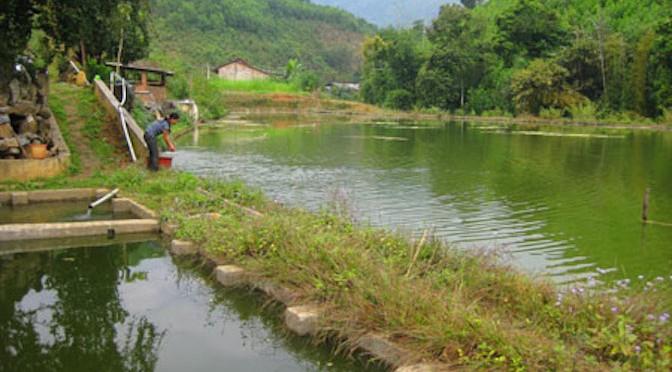 Những đột phá trong nuôi trồng thủy sản