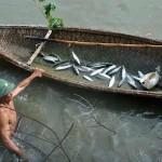 Quảng Trị: Nuôi cá đối mục – giải pháp cho các vùng nuôi tôm bị bỏ hoang