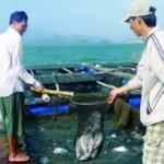 Phòng trị bệnh cá chim vây vàng