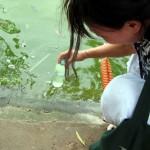 Quản lý tảo trong ao nuôi tôm