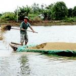 Quy chuẩn kỹ thuật quốc gia về cơ sở nuôi cá tra trong ao
