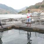 Sơn La: Mường La phát triển nghề nuôi cá lồng