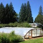 Trang trại tảo mini – hướng đi mới cho nông nghiệp đô thị?