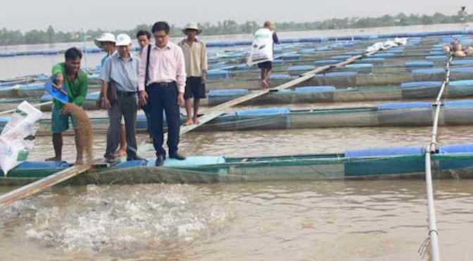 Bến Tre: Khảo sát mô hình nuôi cá rô phi lồng bè