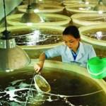 """""""Cần thiết xây dựng trung tâm sản xuất tôm giống tại tỉnh"""""""