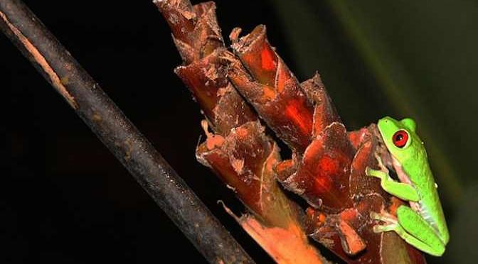 Những khả năng đặc biệt của loài ếch