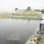 Bình Thuận: Làm giàu từ mô hình nuôi tôm