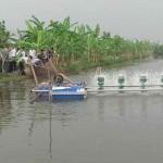 Mô hình nuôi ghép cá rô phi lai xa dòng Isarel theo hướng an toàn đạt hiệu quả cao