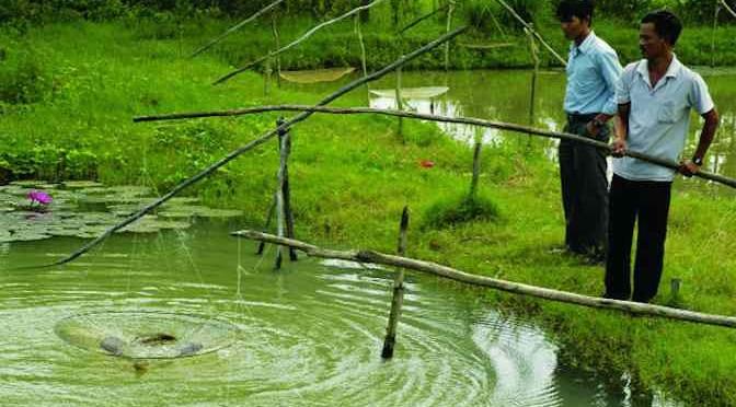 Nuôi thủy sản nước ngọt mùa mưa