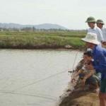 Khánh Hòa: Nuôi tôm sú luân canh – rong câu trong ao nước lợ