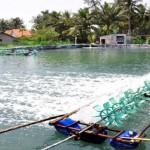 Lưu ý khi sử dụng BKC trong nuôi tôm nước lợ