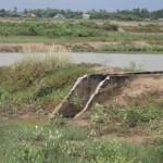 Bến Tre: Thuê đất nuôi thủy sản, doanh nghiệp chạy làng – nông dân ôm nợ