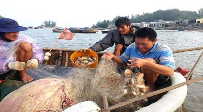 Cúm núm-Món ăn dân dã của ngư dân vùng biển