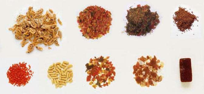 Dịch vụ công bố hợp quy chất lượng thức ăn thủy sản Dinh-duong-thuy-san