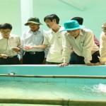 Mô hình nuôi tôm chân trắng kết hợp tôm càng xanh trong môi trường nước ngọt