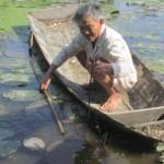 Ông lão miền Tây kiếm tiền tỷ nhờ nuôi cá nước ngọt ở cửa biển