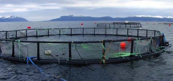 Lồng nuôi cá Đan Mạch