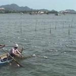 Khánh Hòa: Hiệu quả của mô hình nuôi cá ngựa và rong sụn kết hợp ở Cam Ranh