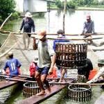 Nâng giá trị sản xuất bền vững ngành nuôi trồng thủy sản