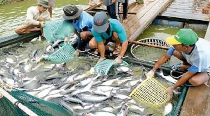Thực hiện GAP trong nuôi trồng thủy sản