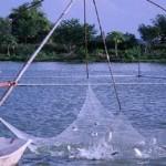 Lợi ích phụ phẩm khí sinh học: Làm thức ăn bổ sung cho cá