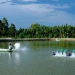 Tác dụng của thuốc trong nuôi trồng thủy sản